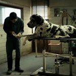 Dogman esce dalla corsa all'Oscar