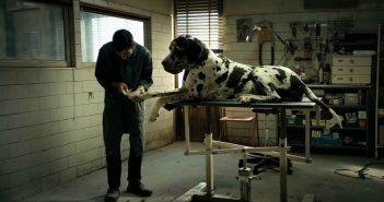 Dogman Oscar